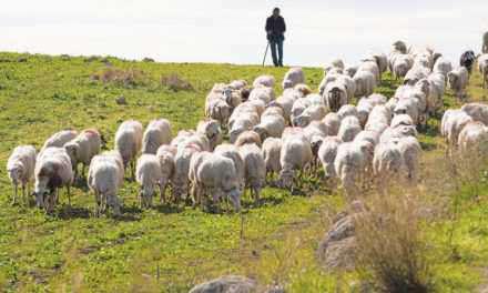 Ξεκινά νέος ενημερωτικός κύκλος για τις προκλήσεις της σύγχρονης κτηνοτροφίας από την Ένωση Αγρινίου
