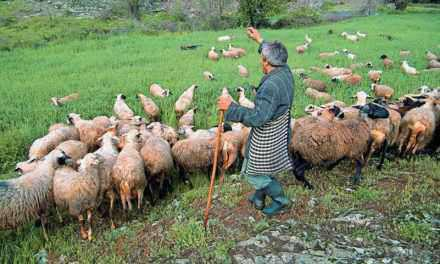 Απελπισµένοι οι κτηνοτρόφοι από την τιµή του γάλακτος