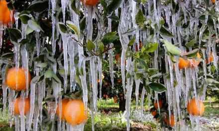Αιτ/νία: Μεγάλες ζημιές από τον παγετό