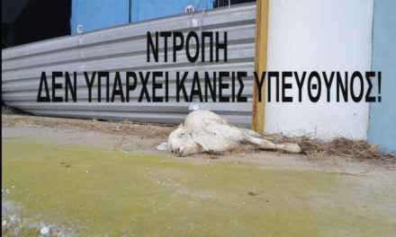 Αγρίνιο:Σβουνιές, ποντίκια, δυσοσμία, νεκρά ζώα και πρόβατα… σε Δημόσιο Κτίριο!