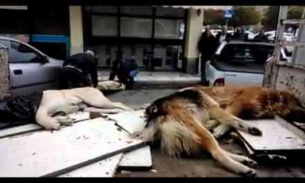 Θανάτωσαν πέντε σκύλους στο Μεσολόγγι