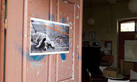 Bazaar από τη  φιλοζωική Οργάνωση Αγρινίου