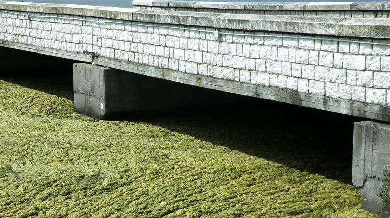 ΒΙΝΤΕΟ-Απέραντος βούρκος η λιμνοθάλασσα στο Αιτωλικό – Τι δηλώνει Συντονιστής του ΦΔ/ ΛΜ  Γ.Σελιμάς