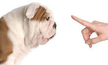 «Μάχη» στο Αγρίνιο μεταξύ φιλόζωων και μη! (ΒΙΝΤΕΟ)