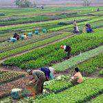Επιπλέον 21 νέοι αγρότες εντάσσονται στο Υπομέτρο 6.1 «Εγκατάσταση Νέων Γεωργών» του ΠΑΑ 2014-2020
