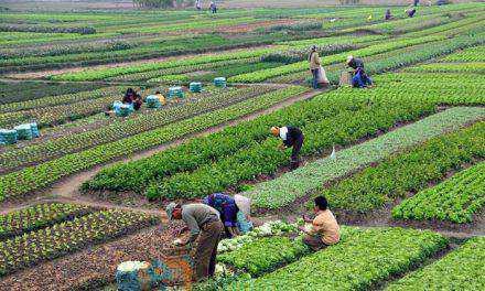 Γ. Βαρεμένος : Επικοινωνία με Β. Αποστόλου για το πρόγραμμα ενίσχυσης νέων αγροτών