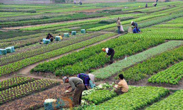 Ξεκινά η προκήρυξη δράσεων για το πρόγραμμα «leader» – κονδύλια ύψους 350 εκατ. ευρω για αναπτυξιακές δράσεις στις αγροτικές περιοχές