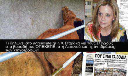 Κτηνοτρόφοι της Λεπενούς κατά της Περιφέρειας για τους ελέγχους στα βοοειδή-Καμία εμπλοκή δεν έχει η Περιφέρεια απαντά η Χ.Σταρακά!