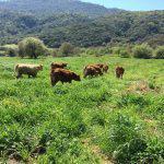 Επαναληπτικοί εμβολιασμοί κατά της οζώδους δερματίτιδας βοοειδών στην Δ.Ε
