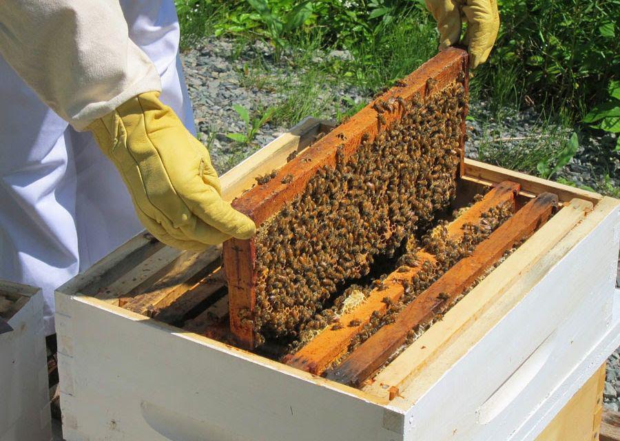 Δράσεις για το μελισσοκομικό πρόγραμμα στην Αιτωλοακαρνανία