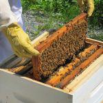 ΔΑΟΚ Αιτ/νίας: Οι δηλώσεις τόπου διαχείμασης μελισσοκομείων και αριθμό κυψελών  μέχρι 31/12