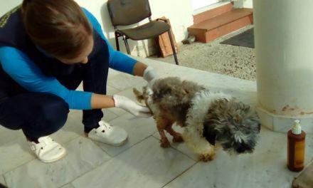 Θερμό επεισόδιο σε κτηνιατρείο στο Αγρίνιο-Ανακοίνωση του Πανελλήνιου Κτηνιατρικού Συλλόγου