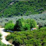 Θρησκευτικές και Πολιτιστικές εκδηλώσεις στη Σπολάιτα Αγρινίου για τον εορτασμό της Αγίας Παρασκευής