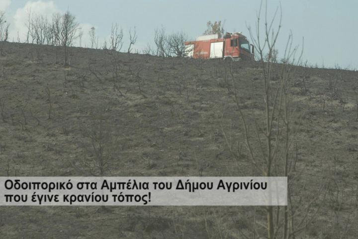 Αμπέλια: Στάχτη και αποκαΐδια εκεί που ήταν το δάσος (φωτο)