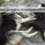 Το Αγρίνιο δεν είναι «τόπος να ζεις» για τα ζώα-  Πολίτες «πήραν την κατάσταση στα χέρια τους»!