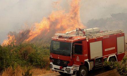 Φωτιά στα Αμπέλια και στη Ρίγανη!