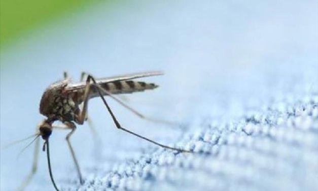 Μέτρα προστασίας από τα κουνούπια-προληπτικές ενέργειες στον Δήμο Ναυπακτίας