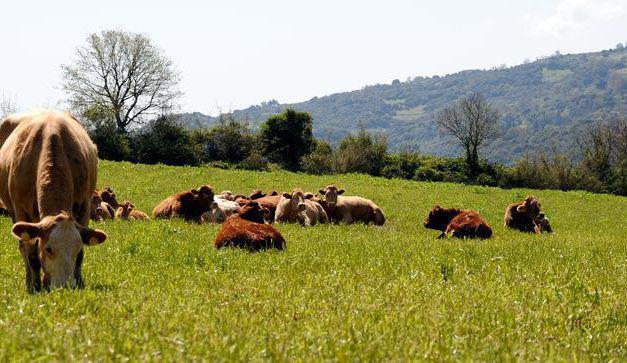 Π.Ε Αιτωλ/νίας- Πληρωμές για βιολογική κτηνοτροφία
