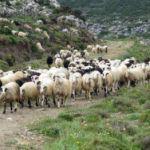 Ολοκληρώθηκε το πρόγραμμα Βιολογική Γεωργία – Κτηνοτροφία 2012-2016 από την Π.Ε Αιτωλοακαρνανίας