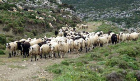 Πρόσκληση προς τους κτηνοτρόφους του Δήμου Ξηρομέρου-Λήγει η προθεσμία στις 31/12