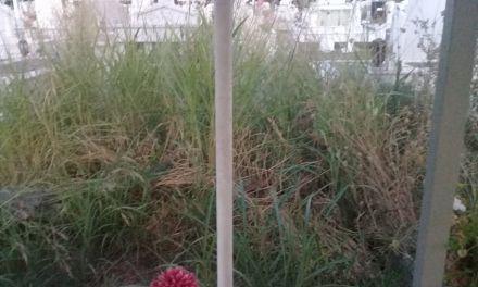 Εικόνες ντροπής στο κοιμητήριο Δοκιμίου!