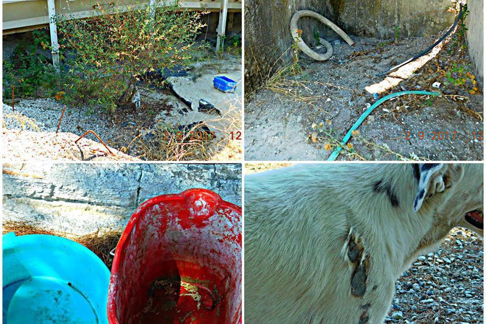 «Σπιναλόγκα ζώων» στο Αγρίνιο- Τα καταδίκασαν σε αργό και  οδυνηρό θάνατο! (Προσοχή: σκληρές εικόνες και βιντεο)