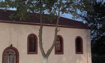 Χρυσοβίτσα Ξηρομέρου- Καρατόμησαν τα δέντρα …για το πανηγύρι!