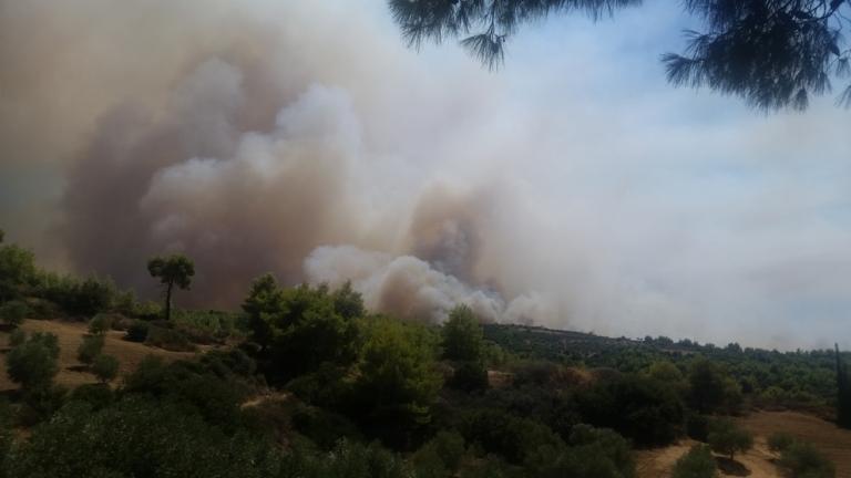 Φωτιά στην Κυρά Βγένα του Δήμου Αγρινίου- Κινδυνεύουμε λέει ο πρόεδρος! (ΒΙΝΤΕΟ)