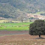 Ενημέρωση των κτηνοτρόφων για τα βοσκοτόπια στην Π.Ε. Αιτωλοακαρνανίας