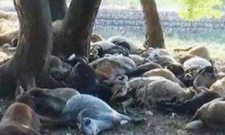 Αιτ/νία: Πτώση κεραυνού σε ποιμνιοστάσιο-50 νεκρά ζώα!