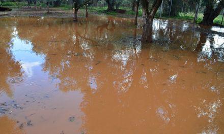 Αιτ/νία-Απόλυτη καταστροφή για δεκάδες ελαιοπαραγωγούς- ζημιές και σε κτηνοτροφικές εγκαταστάσεις από τους ισχυρούς ανέμους.