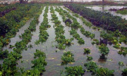 Δήμος Μεσολογγίου: Κήρυξη κατάστασης έκτακτης ανάγκης των περιοχών που επλήγησαν από τα έντονα καιρικά φαινόμενα της 18ης Νοεμβρίου