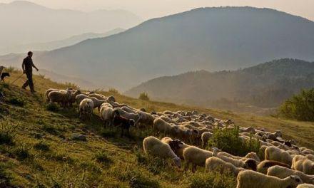 Πληρωμή βιολογικής κτηνοτροφίας στην Π.Ε. Αιτωλ/νίας