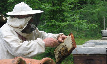 Τριήμερα προγράμματα μελισσοκομίας στο Μεσολόγγι