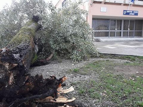 Ξεριζώθηκε τεράστιο δέντρο  στο σχολείο στα Αη Βασιλιώτικα-Αναλυτικά η κατάσταση στην Αιτ/νία