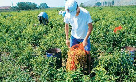Εξωδικαστικός μηχανισμός: Και οι αγρότες στις 120 δόσεις