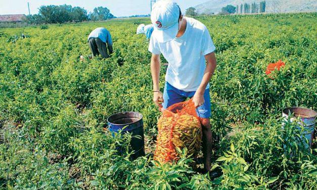 Από σήμερα ως 16 Απρίλη αιτήσεις ενίσχυσης για το Μέτρο Νέων Αγροτών
