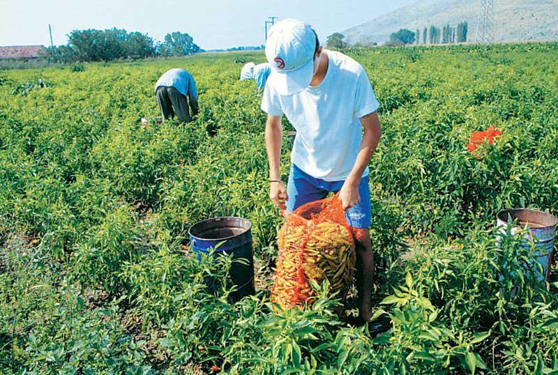 Αποτέλεσμα εικόνας για Β. Αποστόλου στο Συμβούλιο Υπουργών: Χωρίς επαρκείς πόρους δεν θα μπορέσουν οι αγρότες να αντιμετωπίσουν τις προκλήσεις της νέας ΚΑΠ.