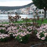 Αμφιλοχία: «Ανθίζουν» οι κοινόχρηστοι χώροι του Δήμου (Φωτο)