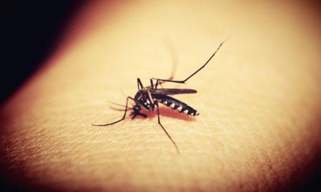 Προληπτικά μέτρα προφύλαξης από τα κουνούπια