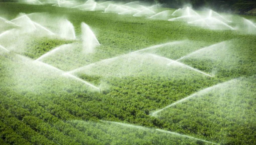 Σε πλήρη ενεργοποίηση ο νόμος για την παραχώρηση εκτάσεων του ΥΠΑΑΤ σε κατά κύριο επάγγελμα αγρότες και σε ανέργους