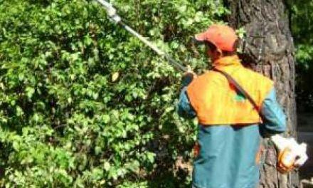 Προσλήψεις στο δήμο Αγρινίου Εργατών Κήπου και Πρασίνου με απόφαση Δημάρχου