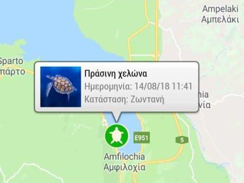 Η Αμφιλοχία στον χάρτη της Google για τις χελώνες caretta – caretta και chelonia mydas