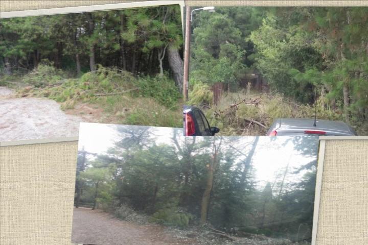 Αγρίνιο-Το δάσος του Αγίου Χριστοφόρου θυμίζει πυριτιδαποθήκηαπό ξερά& κομμένα κλαδιά