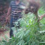 Κατούνα: 45χρονος είχε φτιάξει ειδικό χώρο στον κήπο του για να καλλιεργεί κάνναβη