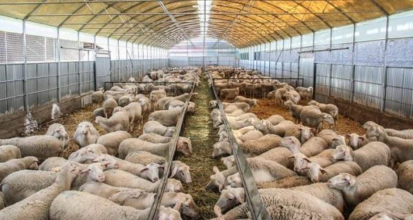 Ρυθμίσεις για την ίδρυση και λειτουργία κτηνοτροφικών εγκαταστάσεων