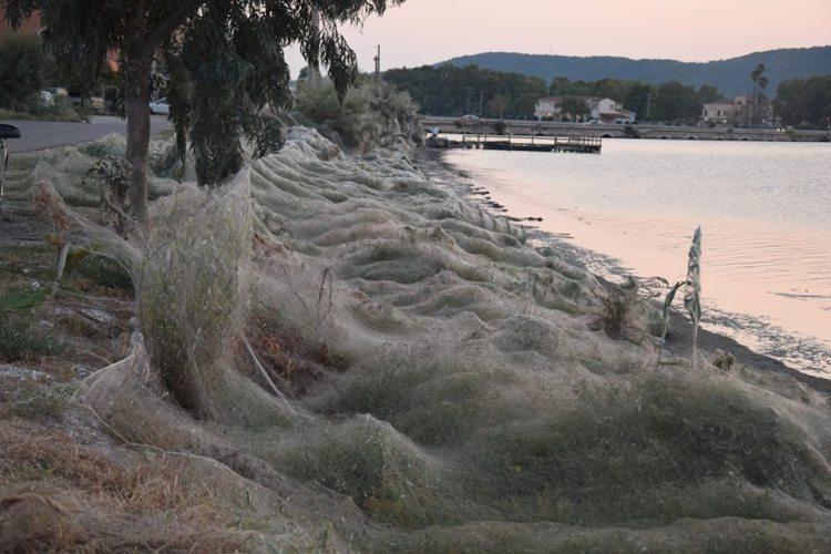 Πρωτόγνωρο θέαμα στο Αιτωλικό-τεράστιο πέπλο από αράχνες