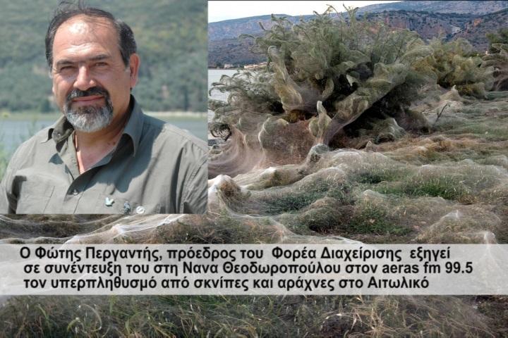 Τι εξήγηση δίνει ο Φ.Περγαντής για τον υπερπληθυσμό από σκνίπες και αράχνες στο Αιτωλικό(βιντεο)