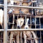 Αιτωλοακαρνανία: Έρευνες για κύκλωμα εμπορίας σκύλων