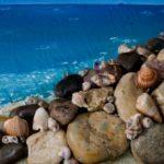 """Αγρίνιο: Έκθεση ζωγραφικής της Βασιλικής Βελέντζα με τίτλο """"Aquatic heaven"""""""